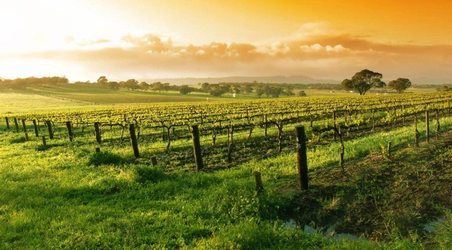 Everything you need to know about safely traveling with wine - The Points Guy