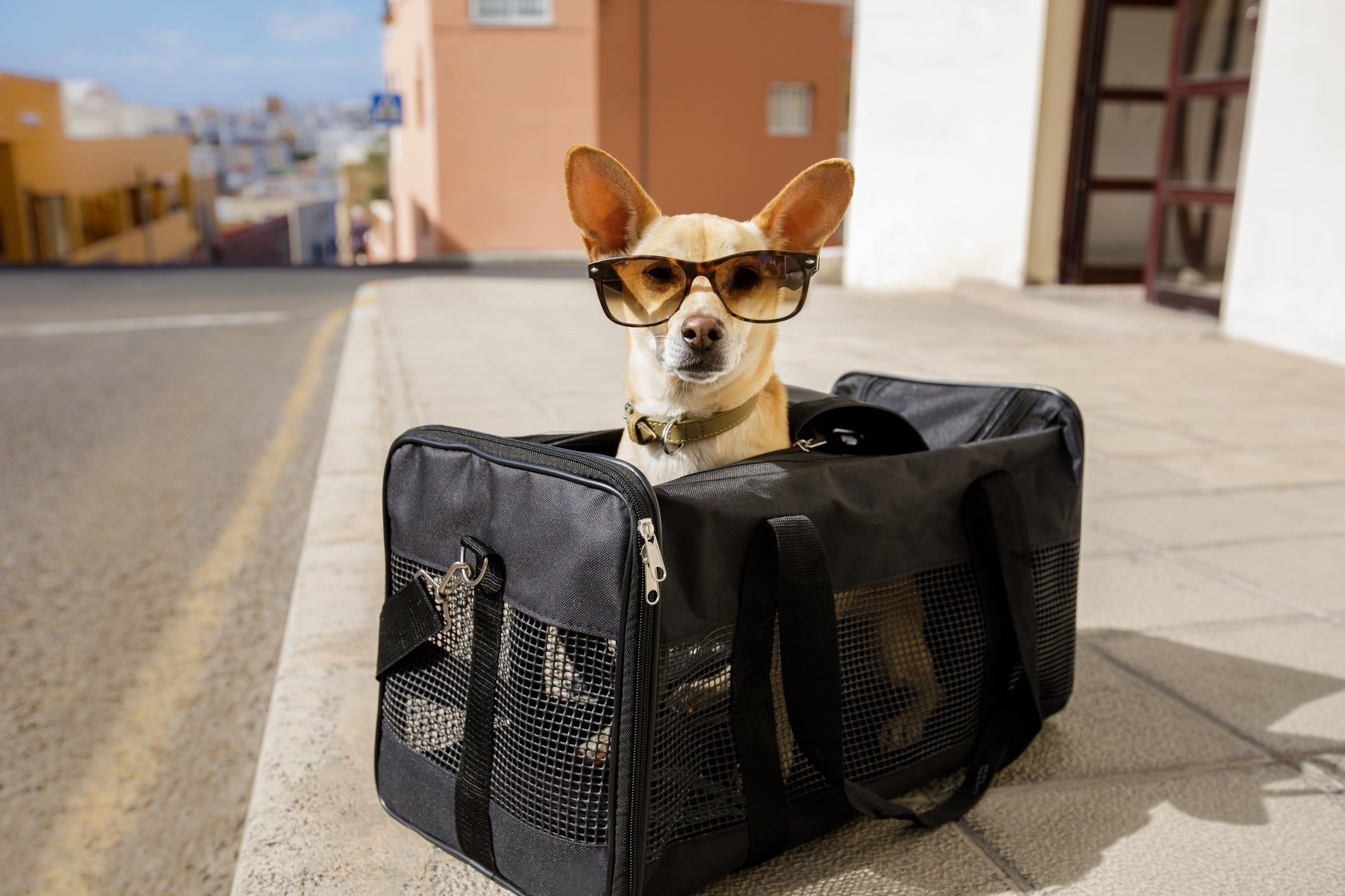 The most expensive plane ticket I've ever purchased was a $14k rescue mission for my dog Watson