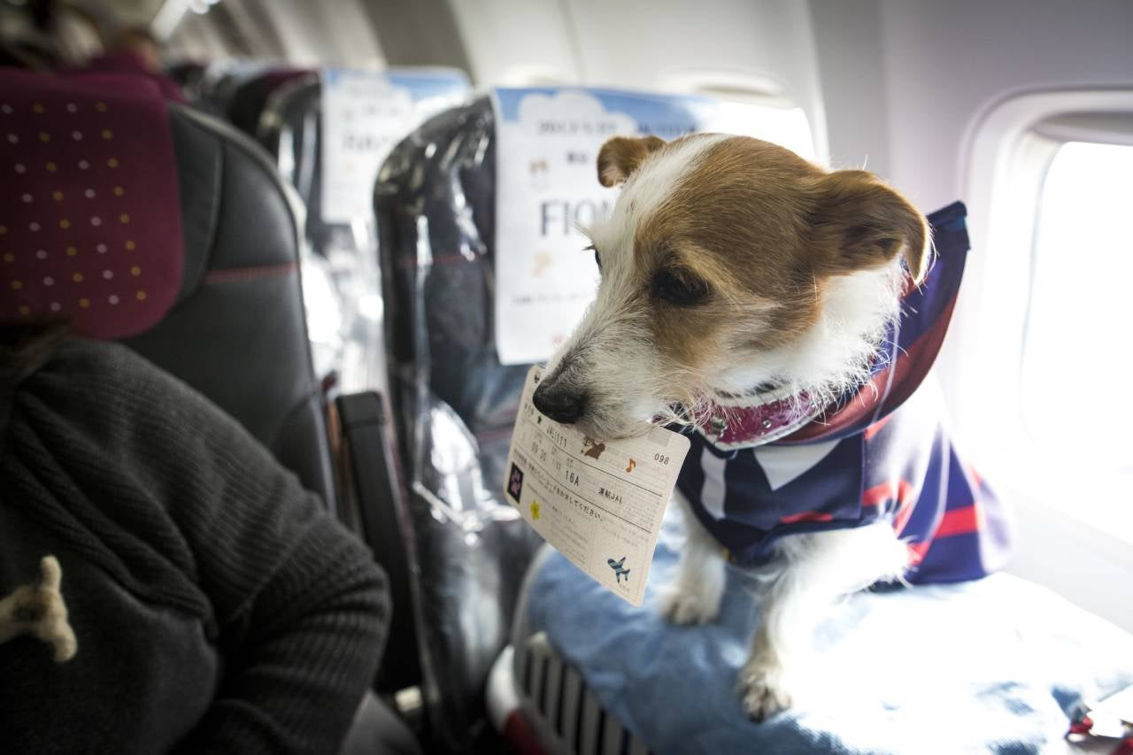 A comprehensive guide to traveling with pets