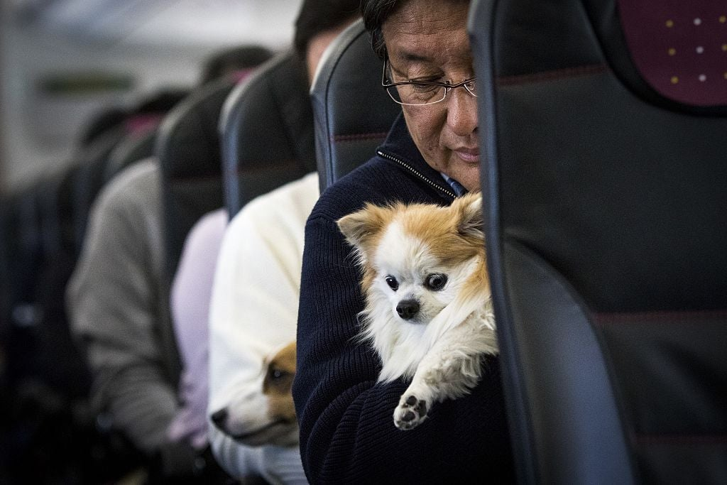 Spirit Sets New Restrictions on Emotional Support Animals