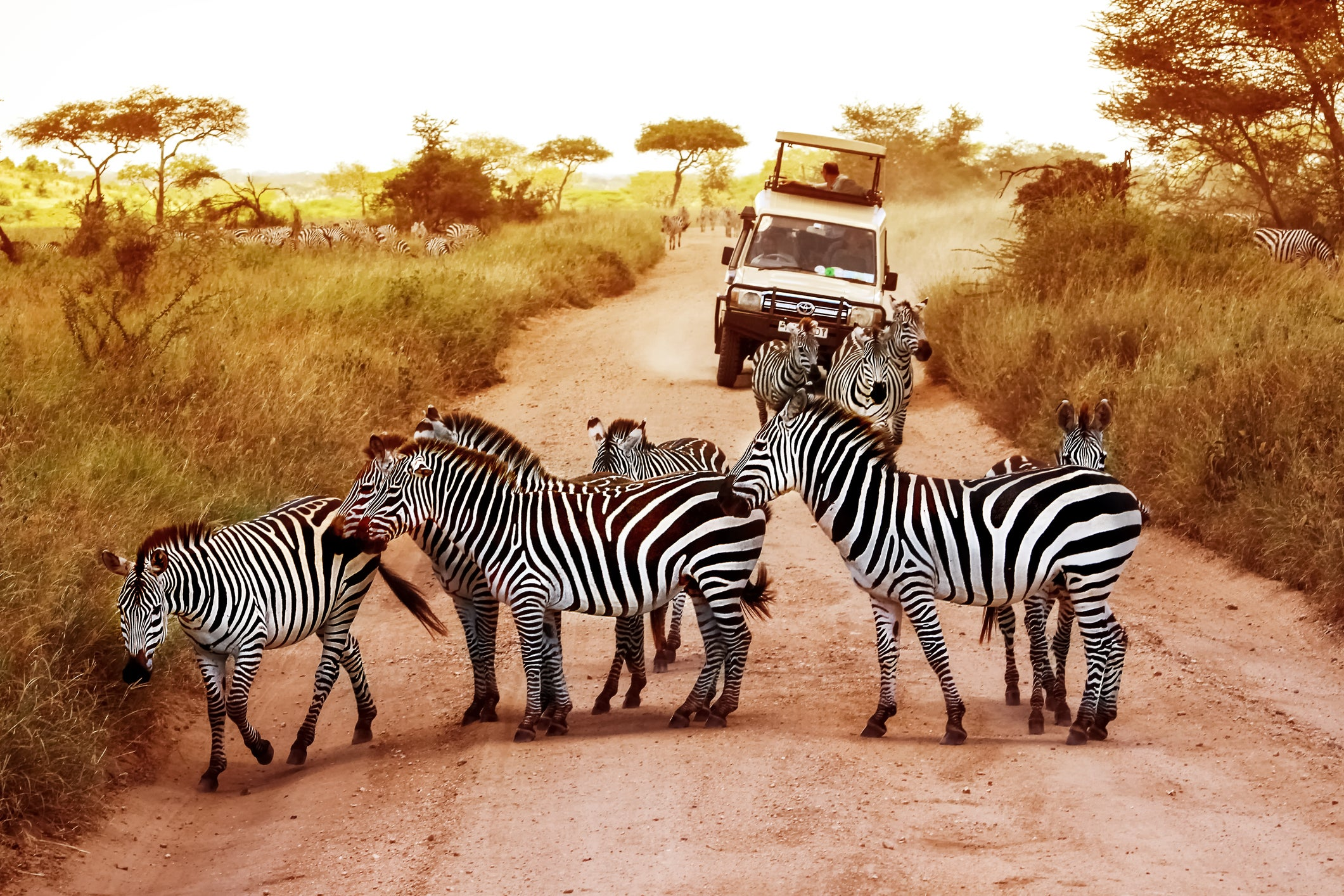Dreaming of an African safari: How I'll book my bucket-list trip to Tanzania on miles and points - The Points Guy