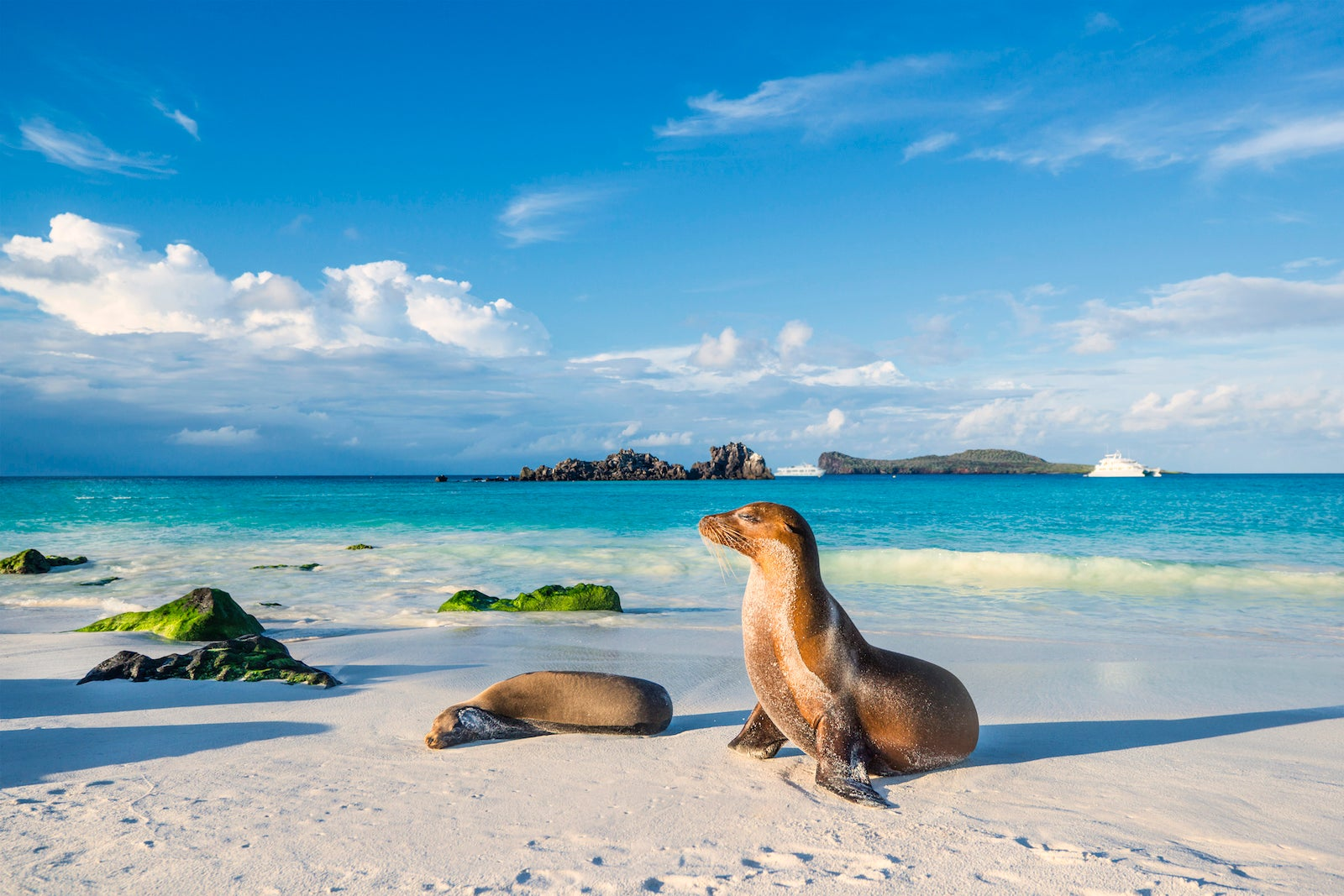 How I saved thousands of dollars by DIY-ing an island hopping trip in the Galapagos - The Points Guy