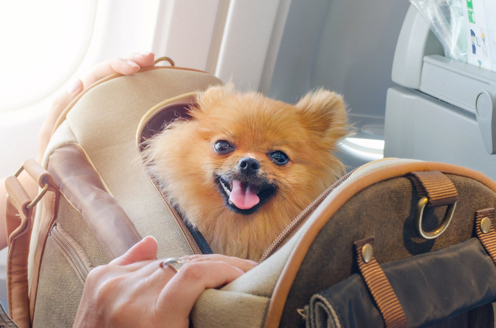 Flying with an emotional support animal (ESA): What you need to know