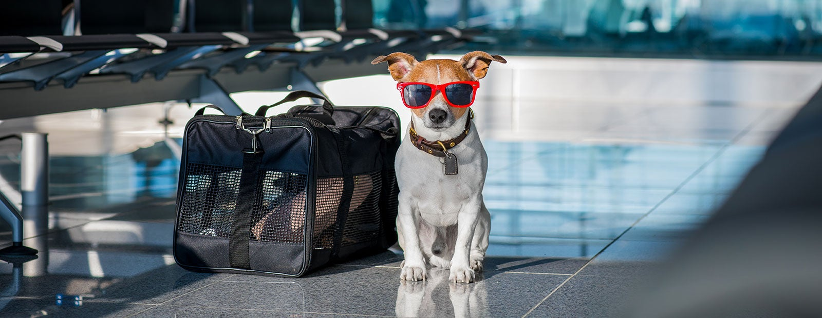 DOT & major airlines officially put their foot down on emotional support animals