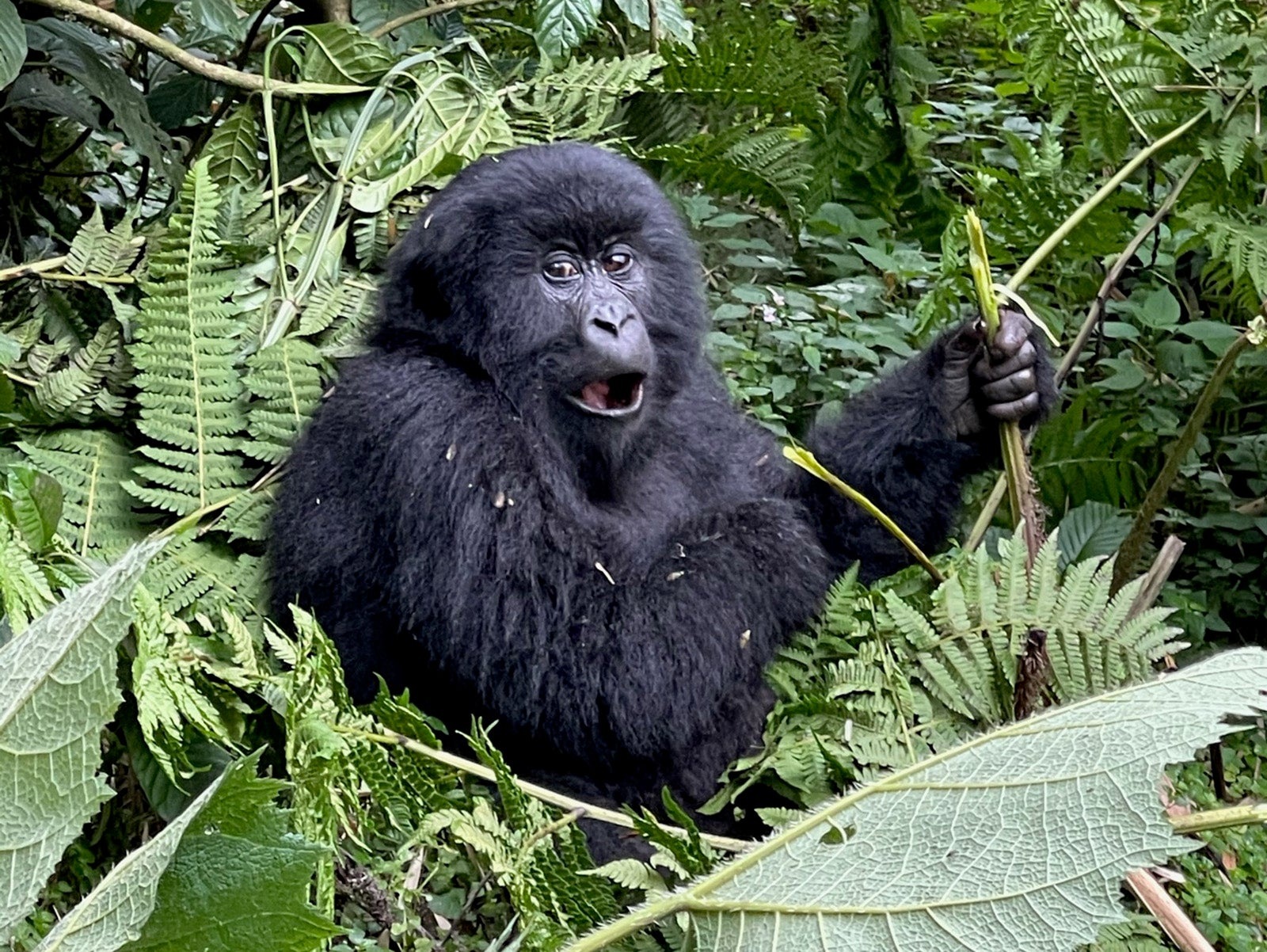 5 reasons why Rwanda needs to be added to your travel bucket list