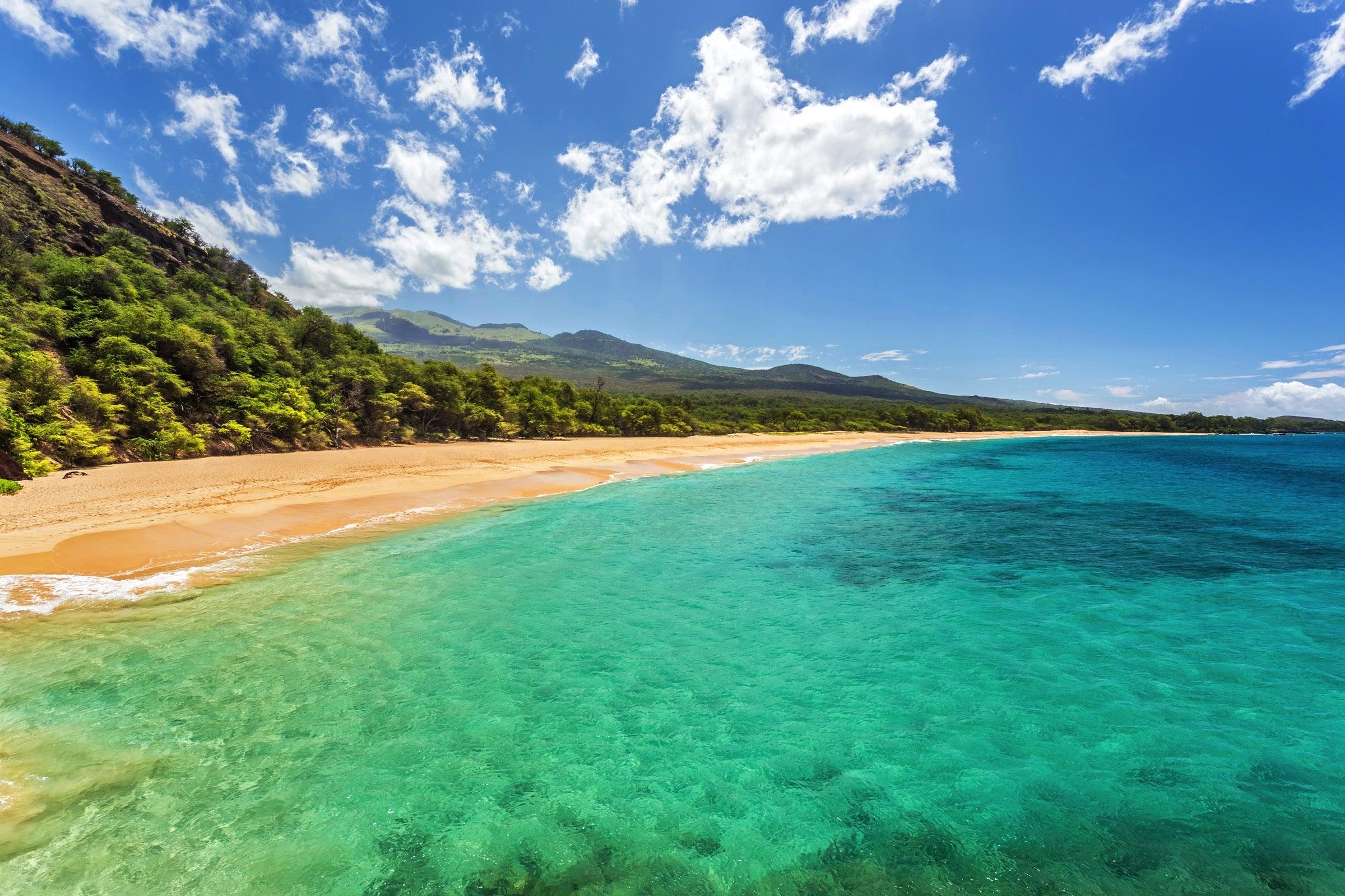 Maui's answer to the car rental shortage: The $50 per person Maui ALOHA Shuttle